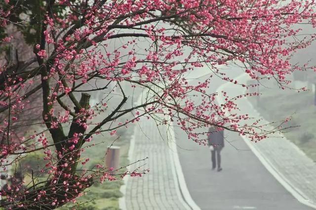 1,沪杭高速——(余杭)转09省道——超山风景区 2,320国道——(塘栖