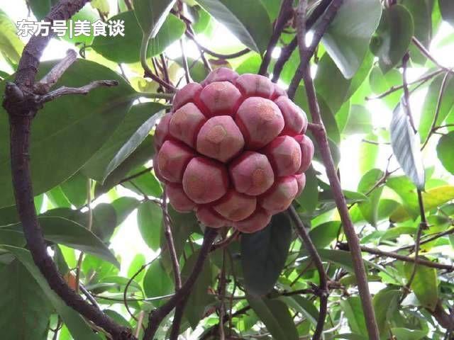 农村这水果长得像绣球,是一种样貌奇特又美味的水果,吃吃它太难