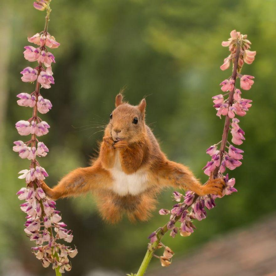 2018最有趣动物照片出炉,看到第一张就忍不住笑出猪叫声!