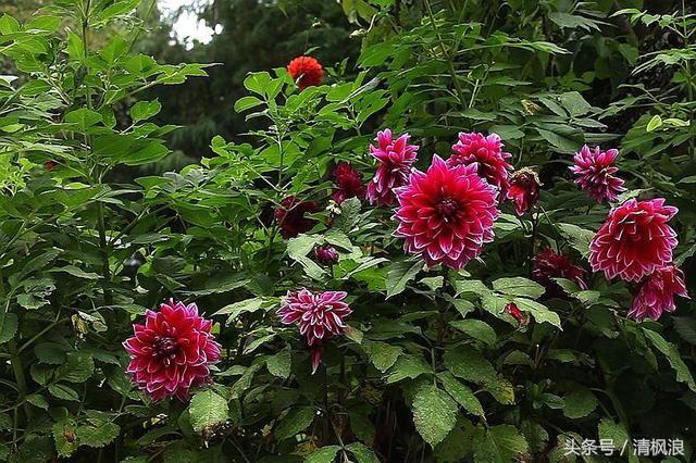 楚雄紫溪山风景区以茶称绝,以古寺闻名千里滇中圣地,森林和奇花异木