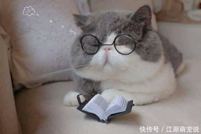 猫咪决定看书学习知识,一分钟之后直接趴下睡觉!