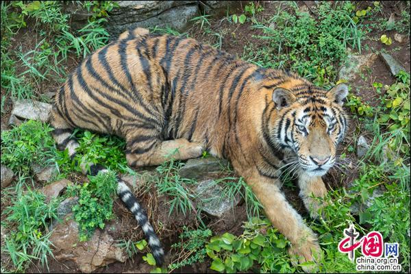 山东宝山前野生动物园开园 动物品种达142种