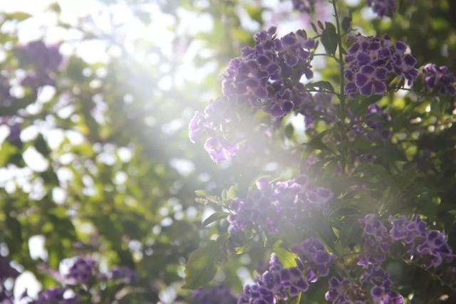 古風紫色風景高清壁紙