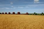 吉林农业:动力足 效益高