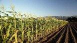 美国即便亏本,也要出口农作物给中国!这是为什么?