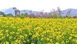 别看这些植物黄黄的,颜值却相当高,不了解一下吗?