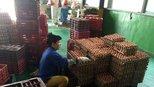鸡蛋价格止跌大涨,预计未来两天井喷式上扬