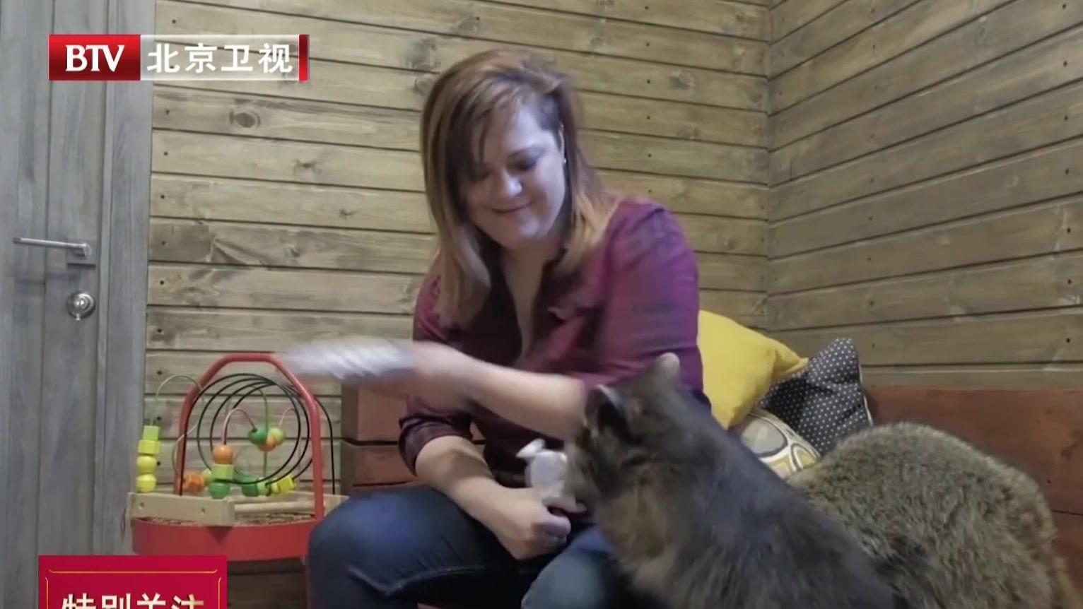 俄罗斯浣熊主题咖啡厅:小浣熊软萌惹人爱