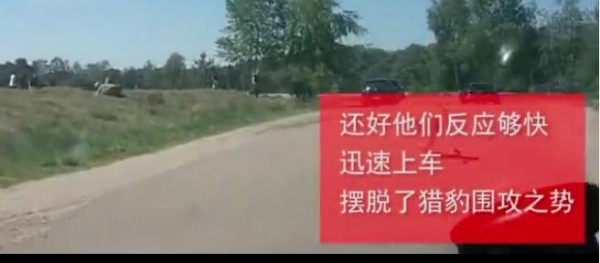 法国游客怀抱婴儿在野生动物园下车拍照 被猎豹围攻险送命! - 周公乐 - xinhua8848 的博客