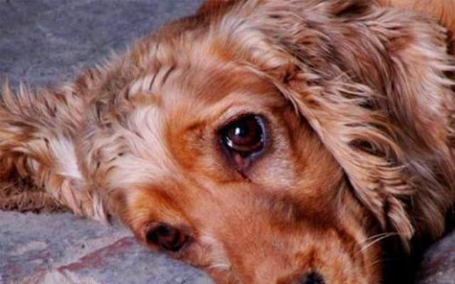狗狗为什么会哭?难道真的是伤心了吗,原来是这
