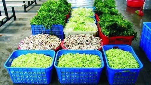 农业农村部下发紧急通知 要求各地抓好蔬菜生产保障供给