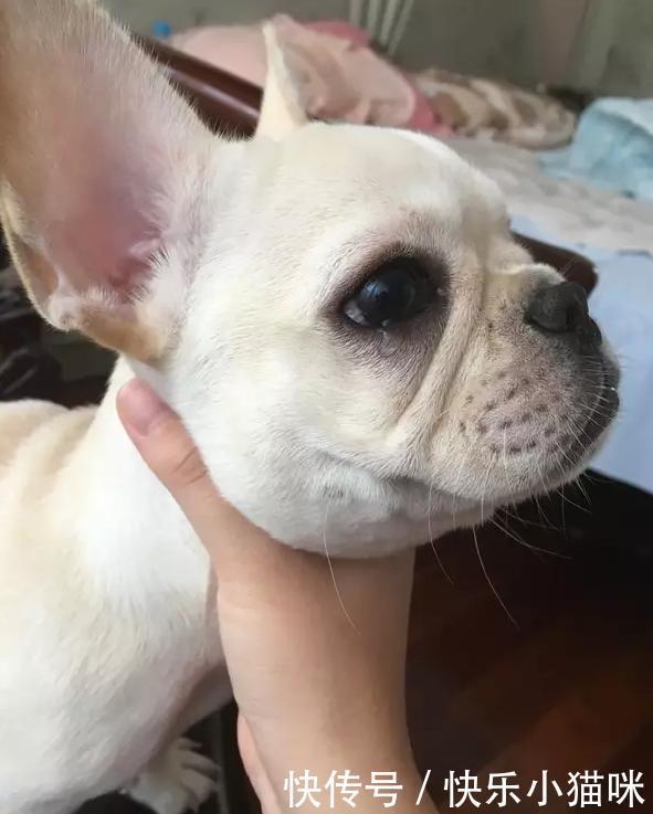 狗狗为什么会哭,这5个原因,你都知道吗?