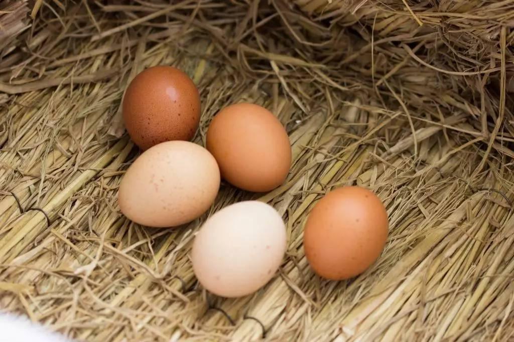 [转】鸡蛋千万不要用水洗 不然让你超后悔 - wayaaaaaa - wayaaaaaa的博客