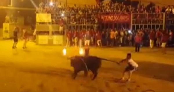 西班牙公牛被点燃牛角绑木柱上 受惊撞柱死亡