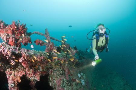 全球首个人造鱼鳃问世,潜水告别氧气瓶,像鱼