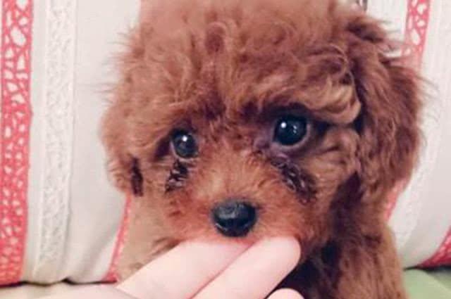 狗狗为什么会哭?难道真的是真的伤心了吗,原来