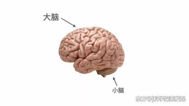 如果人类的大脑被100%开发会怎么样?